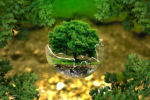 Как экология влияет на окружающую среду и здоровье человека
